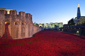 Tower of London and Poppies at Dusk — Stok fotoğraf