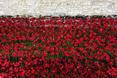 Poppies at the Tower of London — Stock Photo
