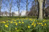 在伦敦绿色公园春天风景 — 图库照片