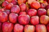 Jablko ovoce — Stock fotografie