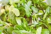 Retro look Corn salat — Foto de Stock