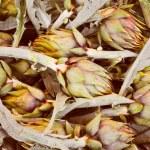 Artichoke vegetables — Stock Photo #52941773