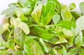 Maíz salat — Foto de Stock