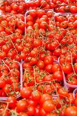 番茄 — 图库照片