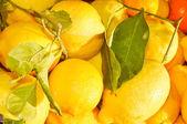 柠檬水果 — 图库照片