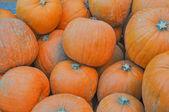 Pumpkin vegetable — Stock Photo