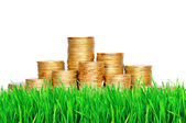 Golden coins in green grass over white background — Stock Photo
