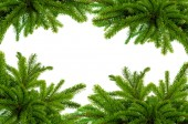 Green Christmas tree isolated on white — Stock Photo