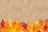 Bright Autumn Maple Leaves over Old Paper Texture — Stock Photo