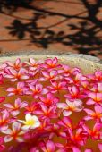 Plumeria Flower arrangement — Stock Photo