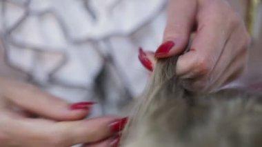 Hairdresser makes hairstyle — Vidéo