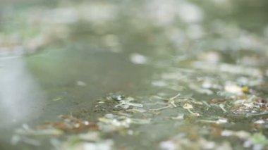 Druipend op stenen pad regen. — Stockvideo