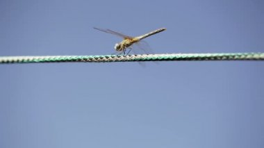 Dragonfly on rope — Stock Video
