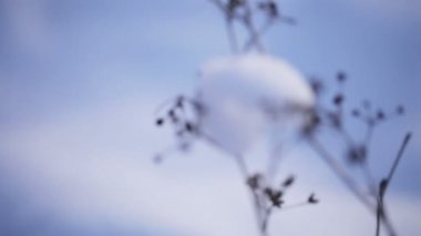 Snows on branches — Wideo stockowe
