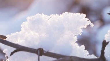 Snows on branches  backlit sun — Stock Video