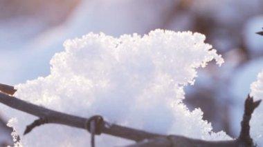 Snows on branches  backlit sun — Vídeo de Stock