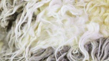 Artificial fur texture — Stock Video