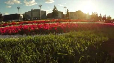 Flower Garden in city park — Stock Video