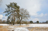 Wasser wiese unter leichter schneefall — Stockfoto