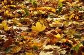 Autumnal bed of leaves dropped — Stock Photo
