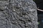 Close-up of the one-piece bituminous coal — Stock Photo