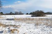 Prado de água sob a neve — Foto Stock
