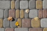 Листья тополя на тротуарная плитка — Стоковое фото