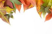 Autumn leaves frame — Stock Photo