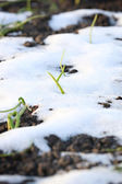 Grass on the ground in the snow — Stock Photo
