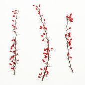 Berberis vulgaris twigs — Stock Photo
