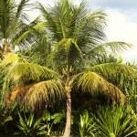 Palm tree — Stock Photo #71719073