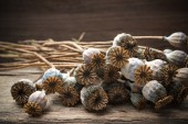 Dried poppies plants — Foto de Stock