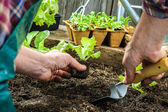 Farmer planting young seedlings — Foto Stock