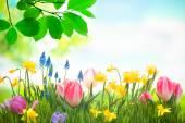 Kolorowe, wiosenne kwiaty — Zdjęcie stockowe
