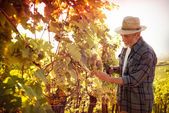Man working in a vineyard — Stock Photo