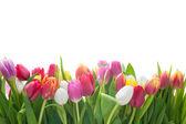Bahar laleler — Stok fotoğraf