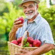 Gardener holds a basket of ripe apples — Stock Photo #64302997