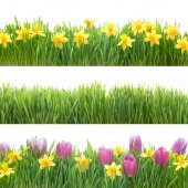 Green grass and spring flowers — Stock Photo