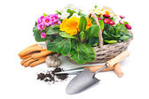 Spring flowers with gardening tools — Stock Photo