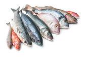 Sea food — Stock Photo