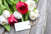 Tulips with an empty tag — Foto de Stock