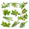 Kitchen herbs collection — Stock Photo #67429943