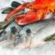 Seafood on ice — Stock Photo #68105215