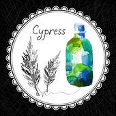 Cypress — Stock Vector