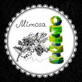 Mimosa — Vetor de Stock