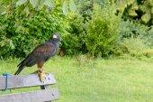 Ptaszek modlić się na ławce w parku miejskim, kąpiel — Zdjęcie stockowe