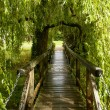 Small wooden bridge under willow tree at Bishop Palace,Wells — Stock Photo #55075567