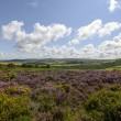 Heather field and hilly countryside, Exmoor  — Stock Photo #57016685