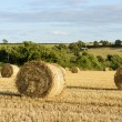 Corn sheaves and hilly countryside, Cornwall — Stock Photo #61176765
