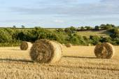 Corn sheaves and hilly countryside, Cornwall — 图库照片